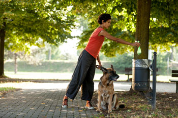 Barking mad! Council uses DNA testing to tackle dog poo image