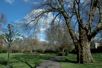 Consultation plans for council tree felling proposed image