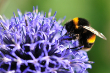 Council adopts new grass cutting approach to save bees image