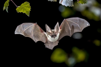 Council criticised over loss of bat habitat image