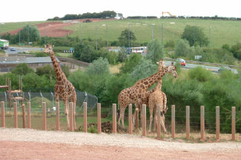 Council refuses zoo licence due to animal deaths image