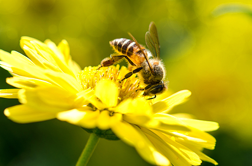 Councils could save thousands with 'bee-friendly' policies image