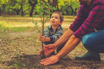 Councils secure £2.9m emergency tree fund image