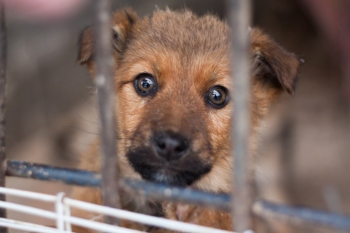 Councils urged to take urgent action to tackle puppy farming image