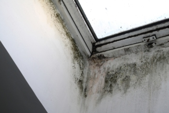 Housing Ombudsman launches damp and mould investigation image
