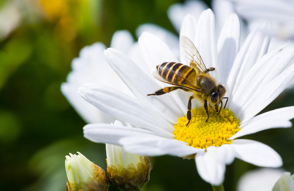 Local authorities urged to protect bees image