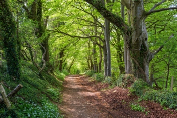 Over 1,000 ancient woodlands at risk from 'built development', charity says image