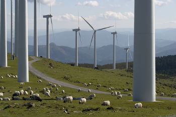 Pickles extends wind farm powers image