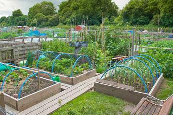 Pickles urged to stop councils deregulating allotments image