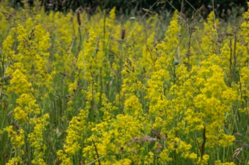 Reduced mowing by councils will protect wild flowers, says charity image