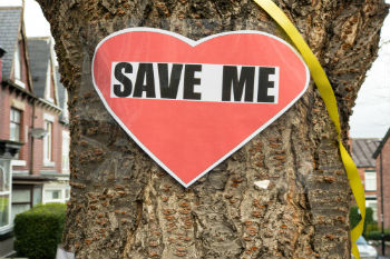 Sheffield CC tables proposal to end tree felling dispute image