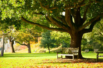Study reveals the economic value of green spaces image