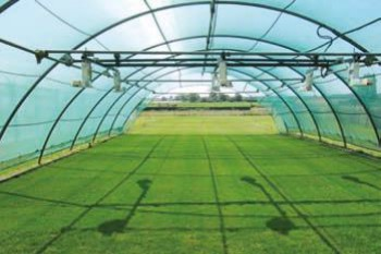 The future of grass breeding image