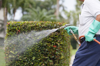 Weed killer ban could add £230m to council tax bills image