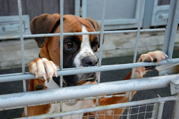 Image of: Charity Rspca Calls For More Council Funding For Animal Welfare Services The Weekly Times Rspca Calls For More Council Funding For Animal Welfare Services
